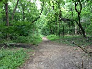 Trails: better than Suburbia.